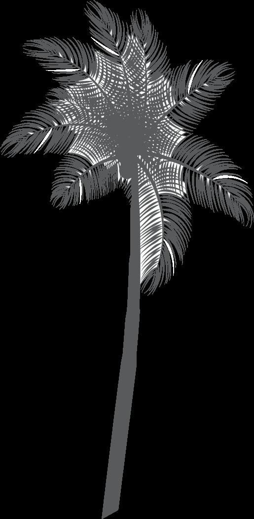 Dessin de palmier - augusterie